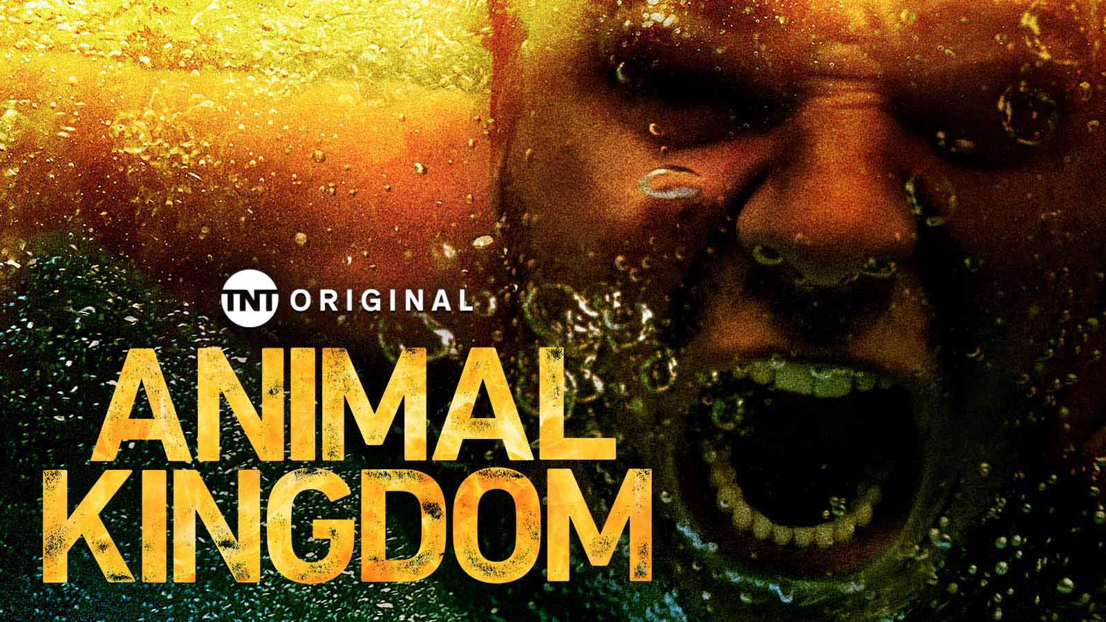 Animal Kingdom 3x05 Espa&ntildeol Disponible